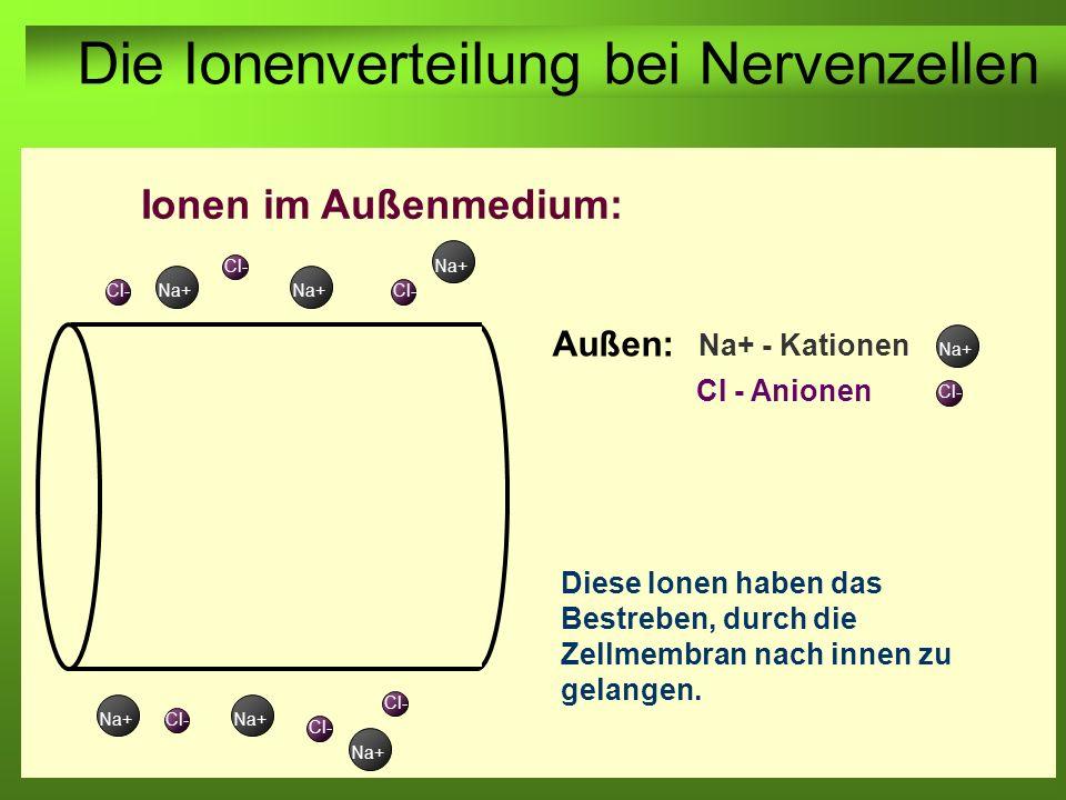 Erstellt von Braun M., Kunnert V., Pichler C. Außen: Na+ - Kationen Ionen im Außenmedium: Cl - Anionen Na+ Cl- Na+ Cl- Die Ionenverteilung bei Nervenz