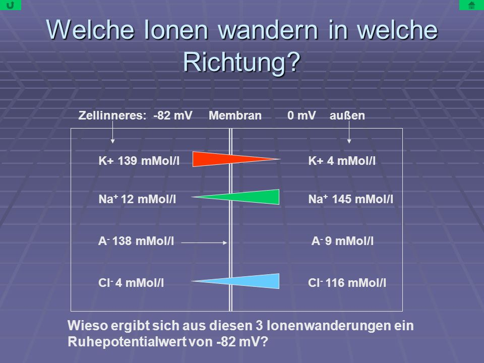 Welche Ionen wandern in welche Richtung? Zellinneres: -82 mV 0 mV außenMembran K+ 139 mMol/l Na + 12 mMol/l A - 138 mMol/l Cl - 4 mMol/l K+ 4 mMol/l N