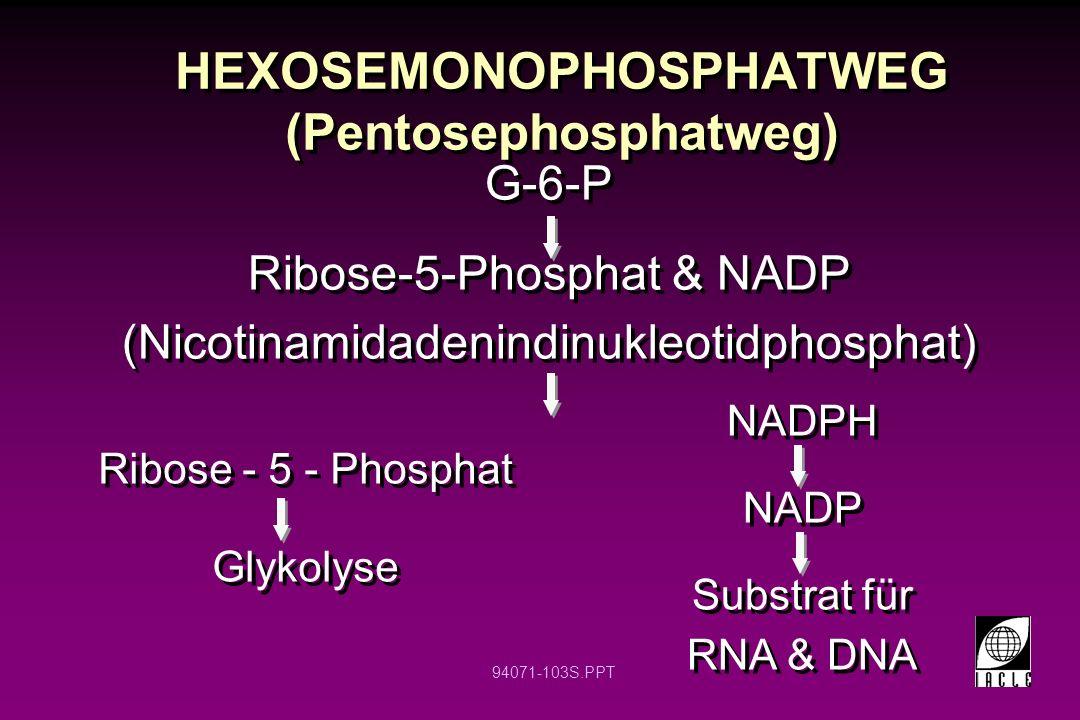 94071-103S.PPT HEXOSEMONOPHOSPHATWEG (Pentosephosphatweg) G-6-P Ribose-5-Phosphat & NADP (Nicotinamidadenindinukleotidphosphat) G-6-P Ribose-5-Phospha