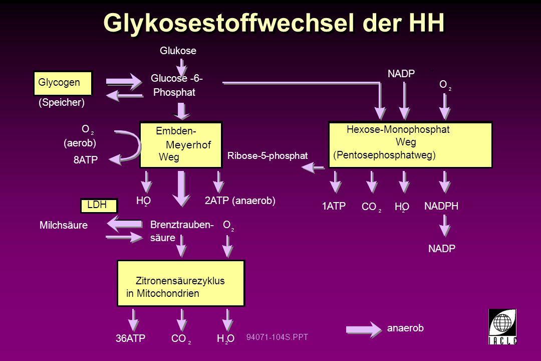 94071-104S.PPT Glykosestoffwechsel der HH