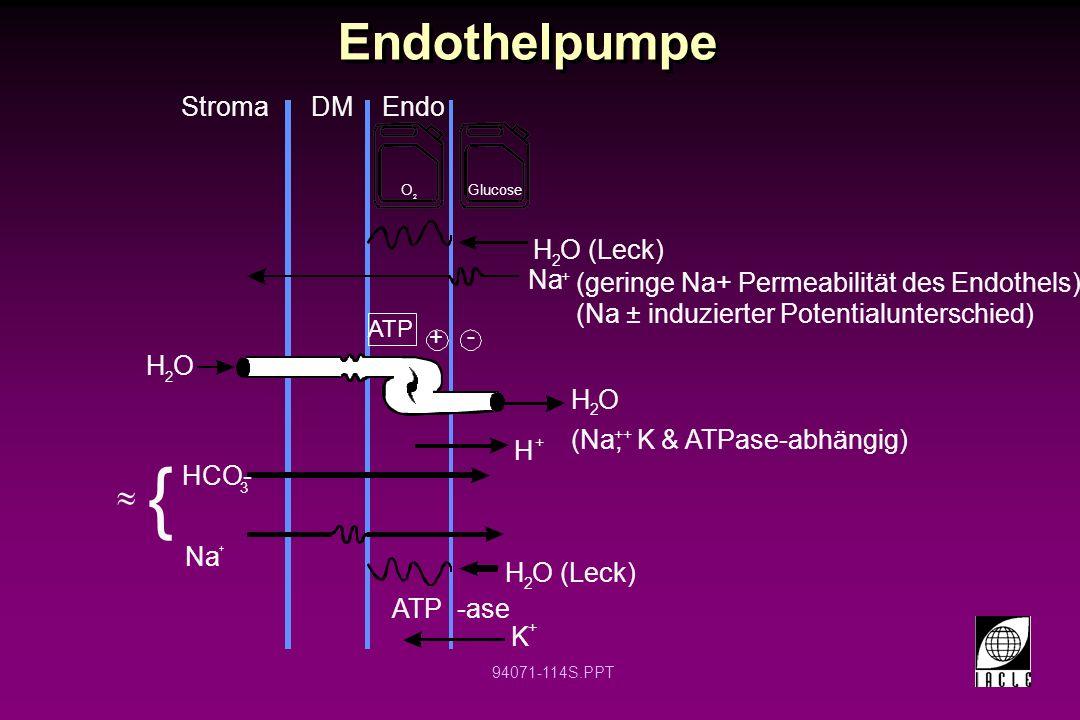 94071-114S.PPT Endothelpumpe H O (Leck) 2 + - H O 2 Stroma Glucose O 2 H O 2 DMEndo H O (Leck) 2 Na + (geringe Na+ Permeabilität des Endothels) (Na ±