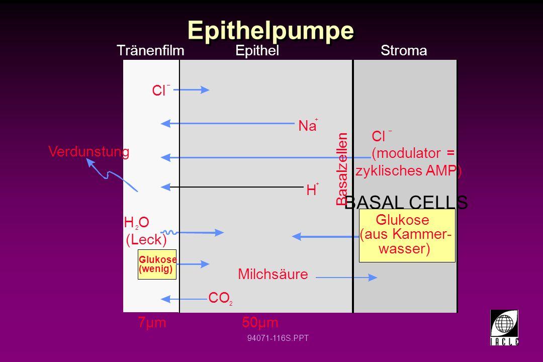 94071-116S.PPT Epithelpumpe Tränenfilm Epithel Stroma Cl – H O (Leck) 2 CO 2 Milchsäure Glukose (aus Kammer- wasser) Cl (modulator = zyklisches AMP) –