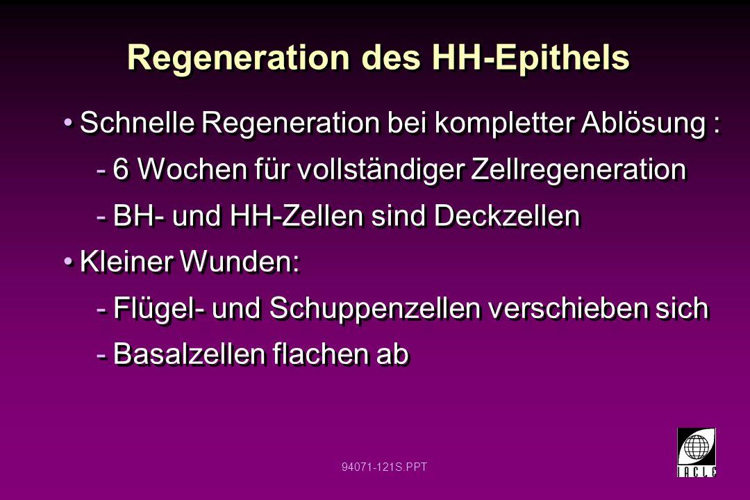94071-121S.PPT Regeneration des HH-Epithels Schnelle Regeneration bei kompletter Ablösung : -6 Wochen für vollständiger Zellregeneration -BH- und HH-Z