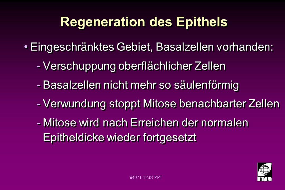 94071-123S.PPT Regeneration des Epithels Eingeschränktes Gebiet, Basalzellen vorhanden: -Verschuppung oberflächlicher Zellen -Basalzellen nicht mehr s