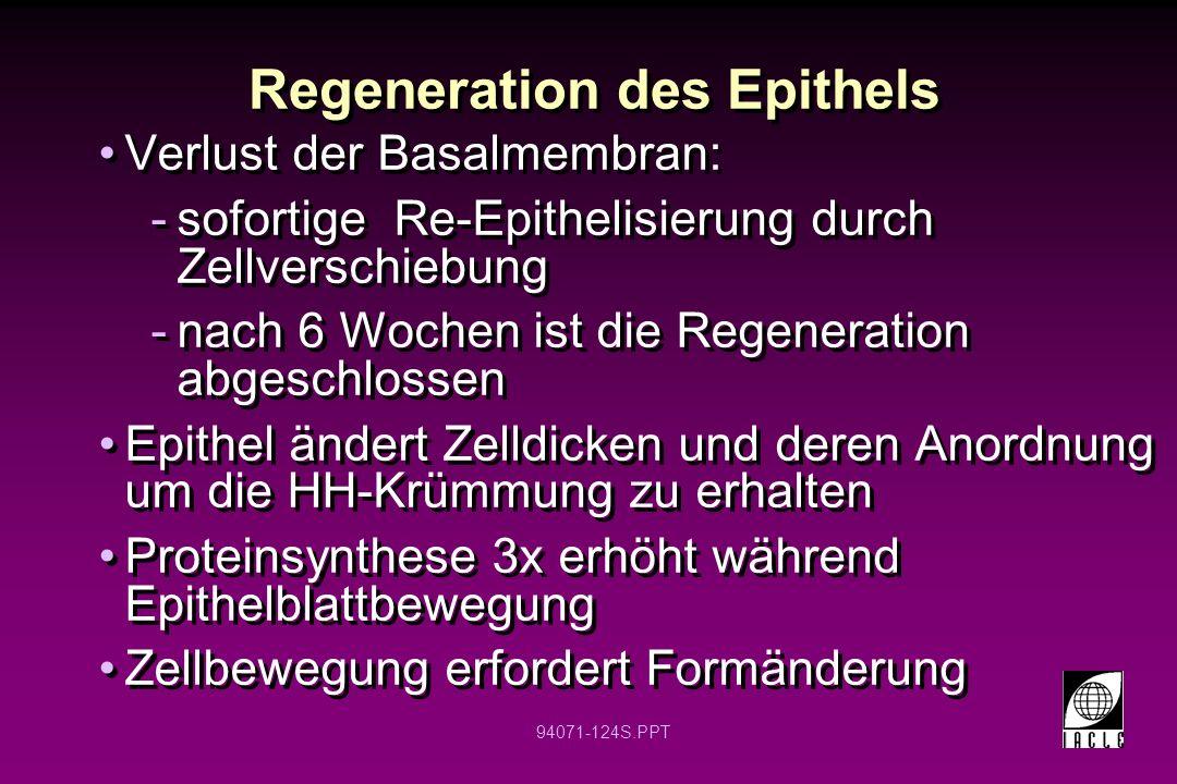 94071-124S.PPT Regeneration des Epithels Verlust der Basalmembran: -sofortige Re-Epithelisierung durch Zellverschiebung -nach 6 Wochen ist die Regener