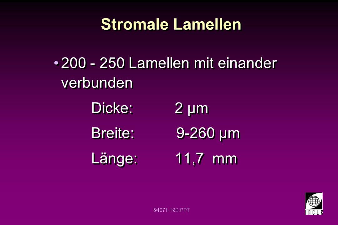 94071-19S.PPT 200 - 250 Lamellen mit einander verbunden Dicke: 2 µm Breite: 9-260 µm Länge: 11,7 mm 200 - 250 Lamellen mit einander verbunden Dicke: 2