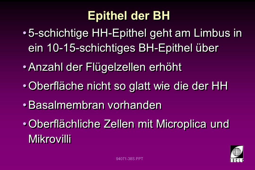 94071-38S.PPT 5-schichtige HH-Epithel geht am Limbus in ein 10-15-schichtiges BH-Epithel über Anzahl der Flügelzellen erhöht Oberfläche nicht so glatt