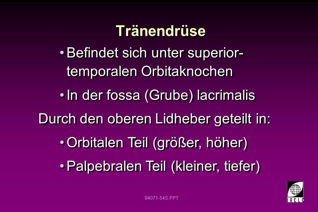 94071-54S.PPT Tränendrüse Befindet sich unter superior- temporalen Orbitaknochen In der fossa (Grube) lacrimalis Durch den oberen Lidheber geteilt in: