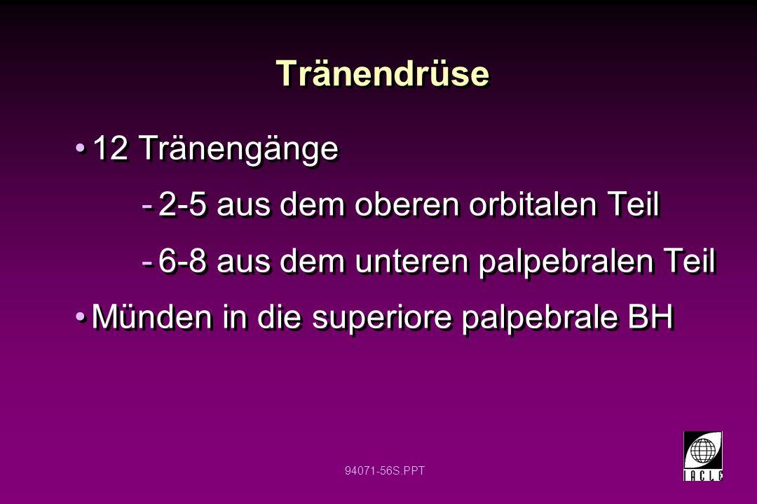 94071-56S.PPT Tränendrüse 12 Tränengänge -2-5 aus dem oberen orbitalen Teil -6-8 aus dem unteren palpebralen Teil Münden in die superiore palpebrale B