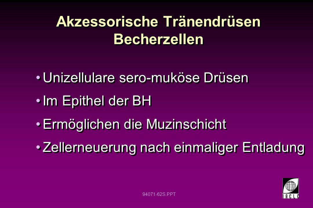 94071-62S.PPT Akzessorische Tränendrüsen Becherzellen Unizellulare sero-muköse Drüsen Im Epithel der BH Ermöglichen die Muzinschicht Zellerneuerung na