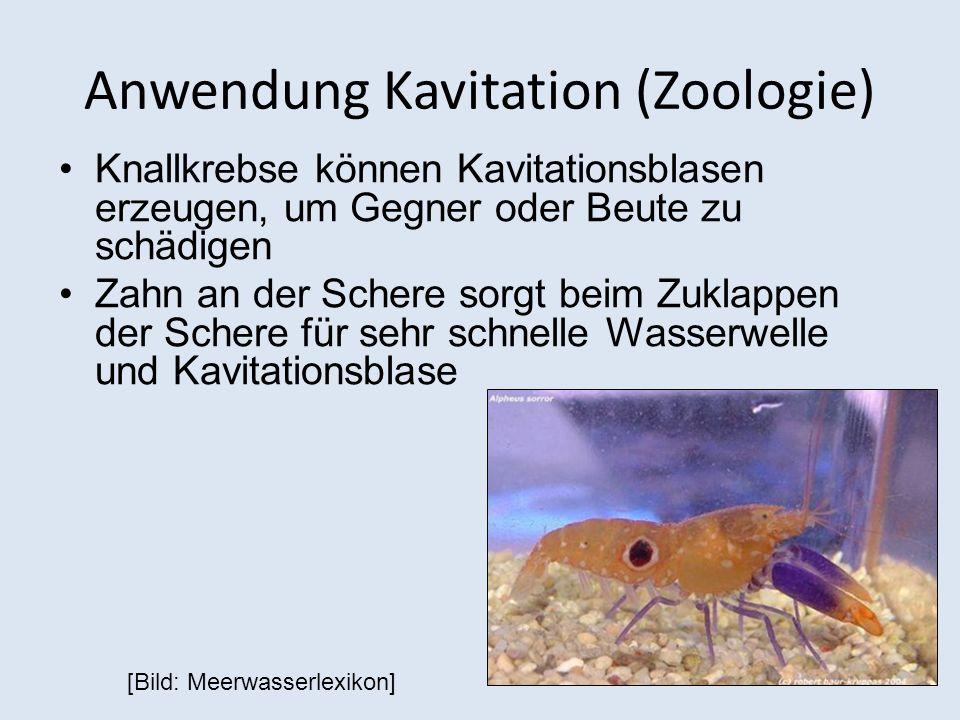 Anwendung Kavitation (Zoologie) Knallkrebse können Kavitationsblasen erzeugen, um Gegner oder Beute zu schädigen Zahn an der Schere sorgt beim Zuklapp