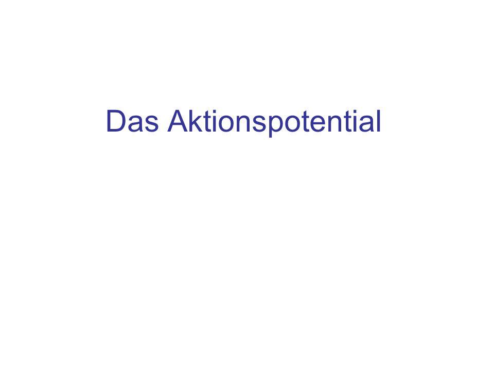 Inhalt Ionen Fluss zum Aufbau eines Aktionspotentials Reiz- und Depolarisationsphase: Öffnung der Na + Kanäle Repolarisation: Schließen der Na + -, Öffnen der K + Kanäle Vollständige Inaktivierung der Na + Kanäle, das Nachpotential Selektive Öffnung der Na + Kanäle: zurück zum Ruhepotential