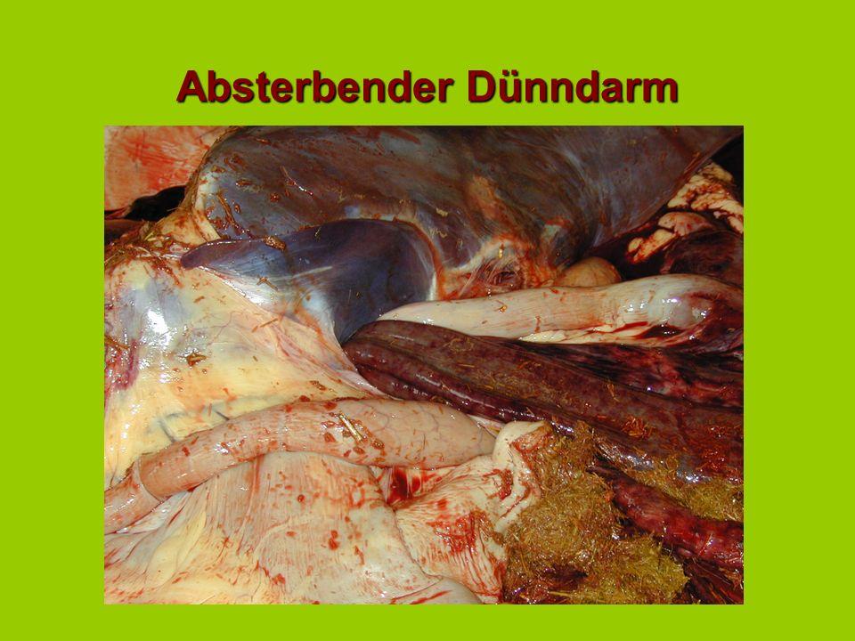 Cardiovaskulärer Status (2) Bei ausgeprägter Endotoxinämie ändern sich einige Symptome:Bei ausgeprägter Endotoxinämie ändern sich einige Symptome: Die