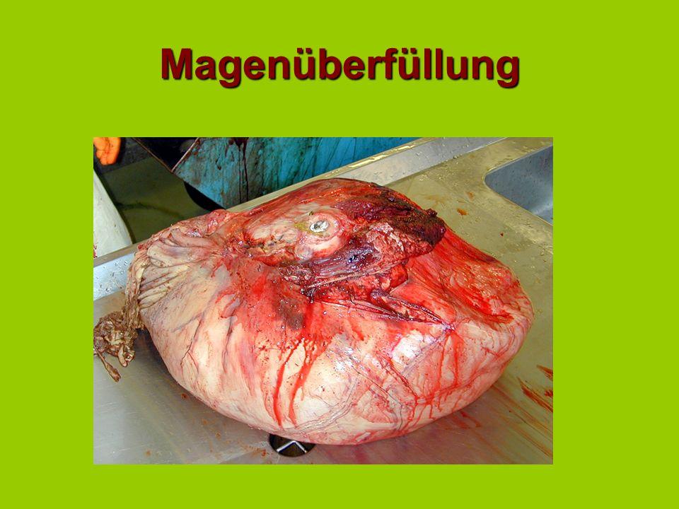 Magenreflux Hinweis auf DünndarmileusHinweis auf Dünndarmileus gelegentlich bei Dickdarmverlagerungen, wobei das Duodenum komprimiert wurde.gelegentli