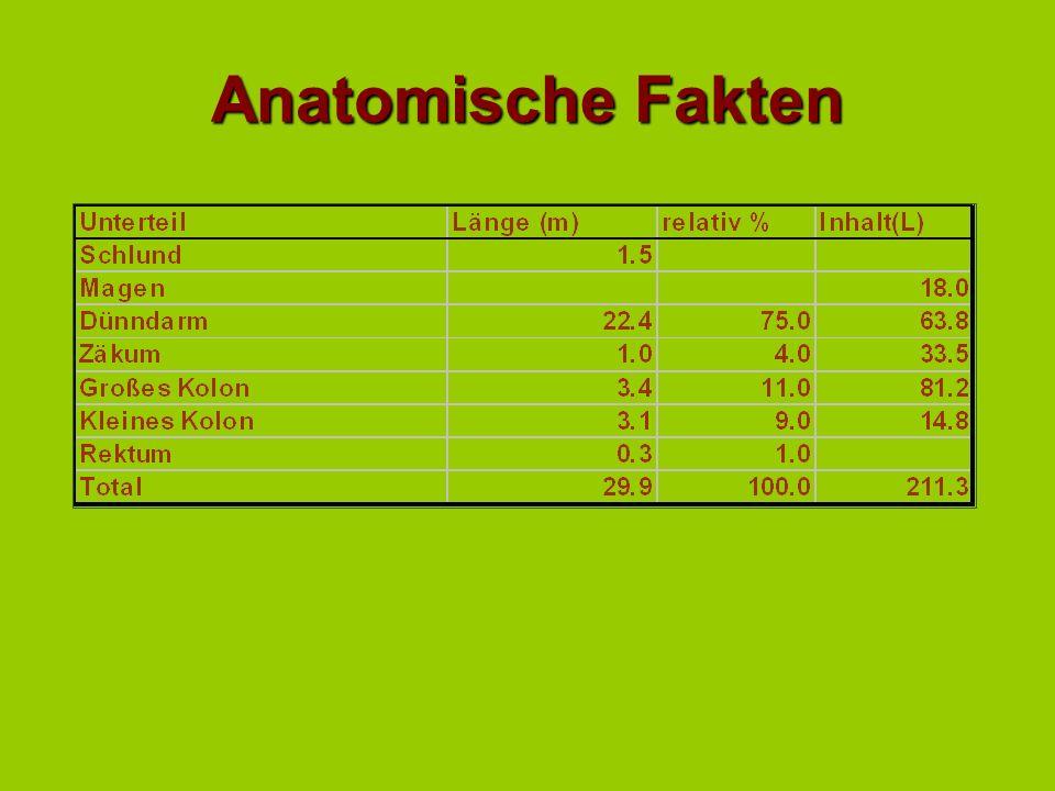 Prädisposition zu Darmproblemen Anatomische Besonderheiten:Anatomische Besonderheiten: –langes Dünndarmgekröse –präformierte Lücken –Große Teile des g