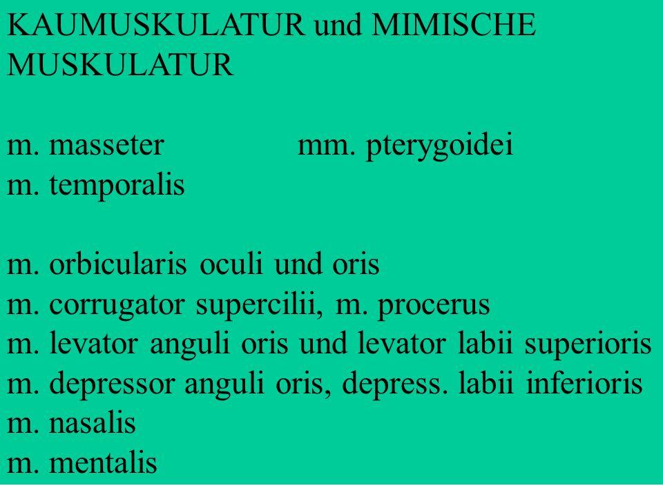 KAUMUSKULATUR und MIMISCHE MUSKULATUR m. masseter mm. pterygoidei m. temporalis m. orbicularis oculi und oris m. corrugator supercilii, m. procerus m.