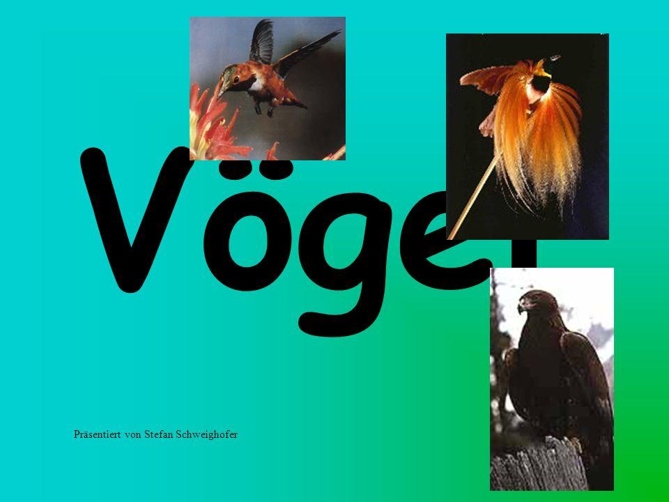 Vögel Präsentiert von Stefan Schweighofer