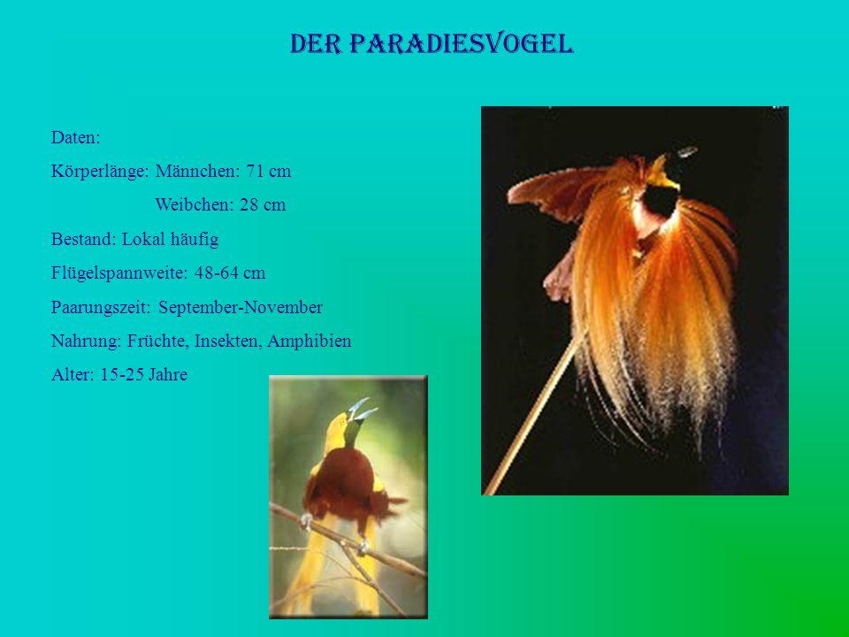 Der Paradiesvogel Daten: Körperlänge: Männchen: 71 cm Weibchen: 28 cm Bestand: Lokal häufig Flügelspannweite: 48-64 cm Paarungszeit: September-Novembe