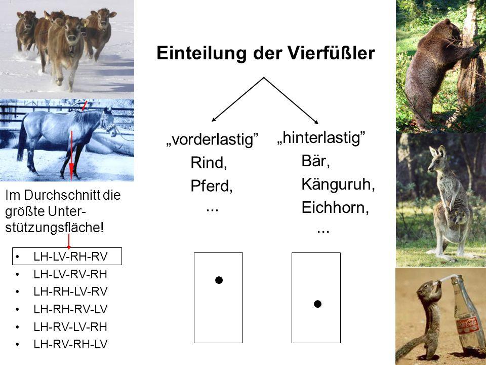 16 Im Durchschnitt die größte Unter- stützungsfläche! Einteilung der Vierfüßler vorderlastig Rind, Pferd,... hinterlastig Bär, Känguruh, Eichhorn,...
