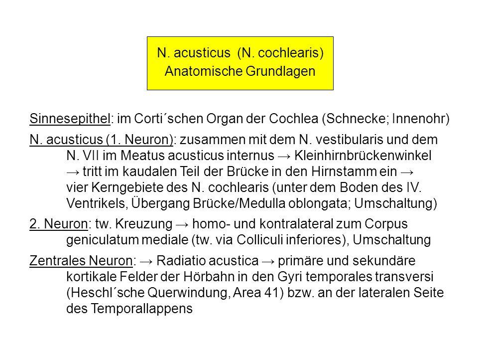 N. acusticus (N. cochlearis) Anatomische Grundlagen Sinnesepithel: im Corti´schen Organ der Cochlea (Schnecke; Innenohr) N. acusticus (1. Neuron): zus
