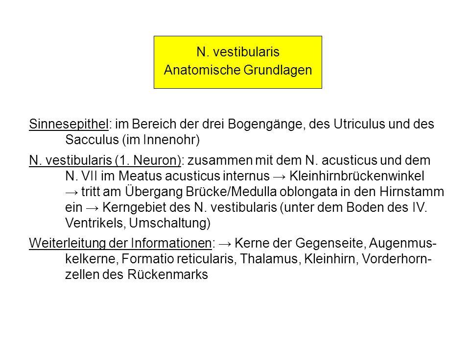 N. vestibularis Anatomische Grundlagen Sinnesepithel: im Bereich der drei Bogengänge, des Utriculus und des Sacculus (im Innenohr) N. vestibularis (1.