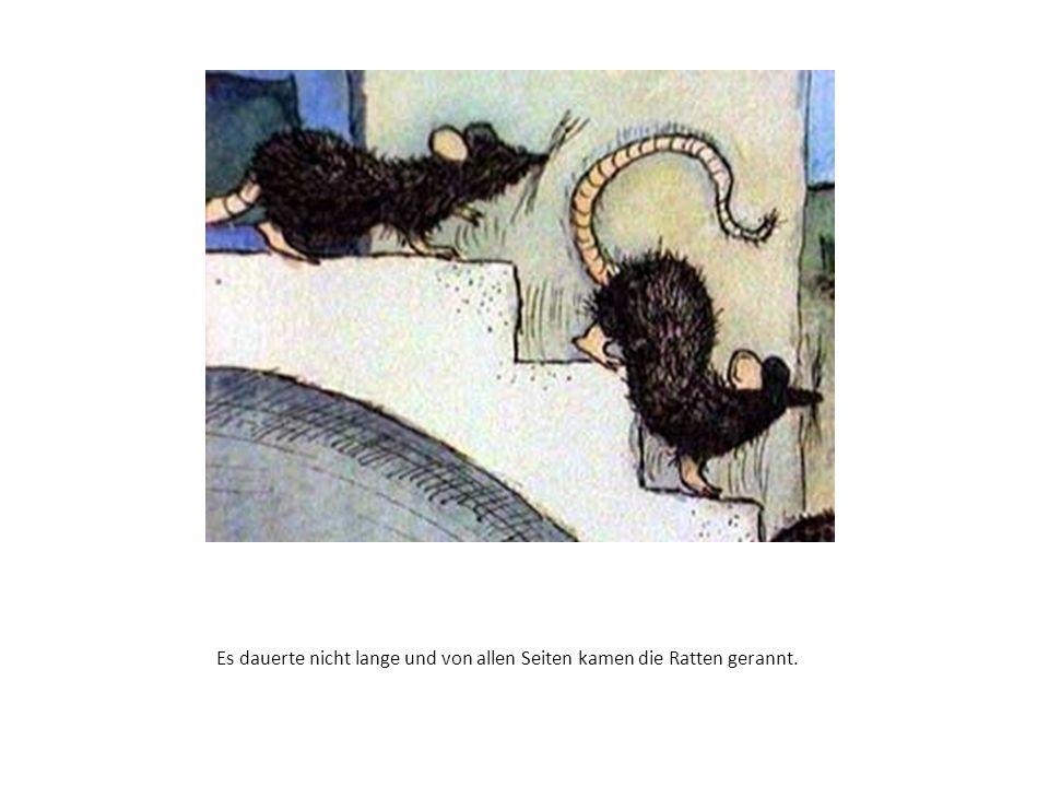 Es dauerte nicht lange und von allen Seiten kamen die Ratten gerannt.