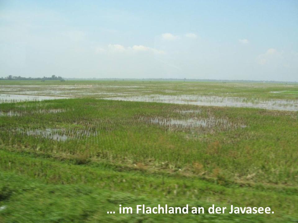 … im Flachland an der Javasee.