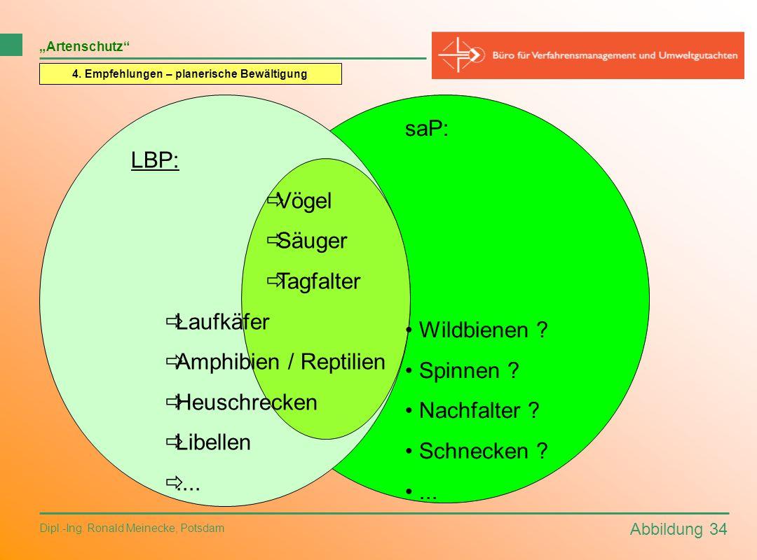 Abbildung 34 Dipl.-Ing. Ronald Meinecke, Potsdam Artenschutz 4. Empfehlungen – planerische Bewältigung LBP: Vögel Säuger Tagfalter Laufkäfer Amphibien