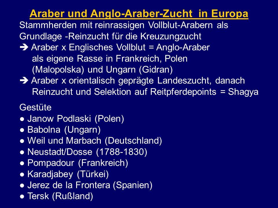 Araber und Anglo-Araber-Zucht in Europa Stammherden mit reinrassigen Vollblut-Arabern als Grundlage -Reinzucht für die Kreuzungzucht Araber x Englisch