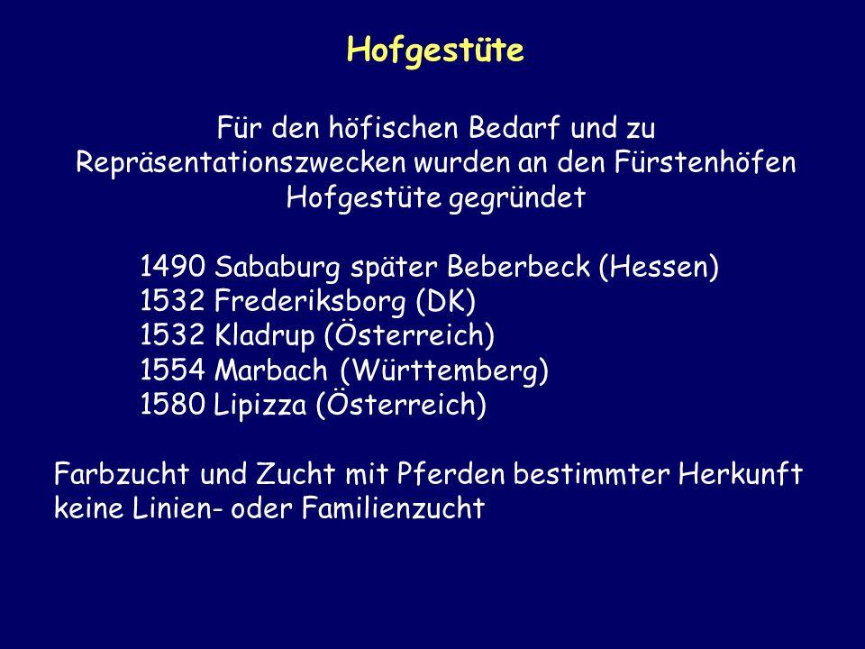Hofgestüte Für den höfischen Bedarf und zu Repräsentationszwecken wurden an den Fürstenhöfen Hofgestüte gegründet 1490 Sababurg später Beberbeck (Hess