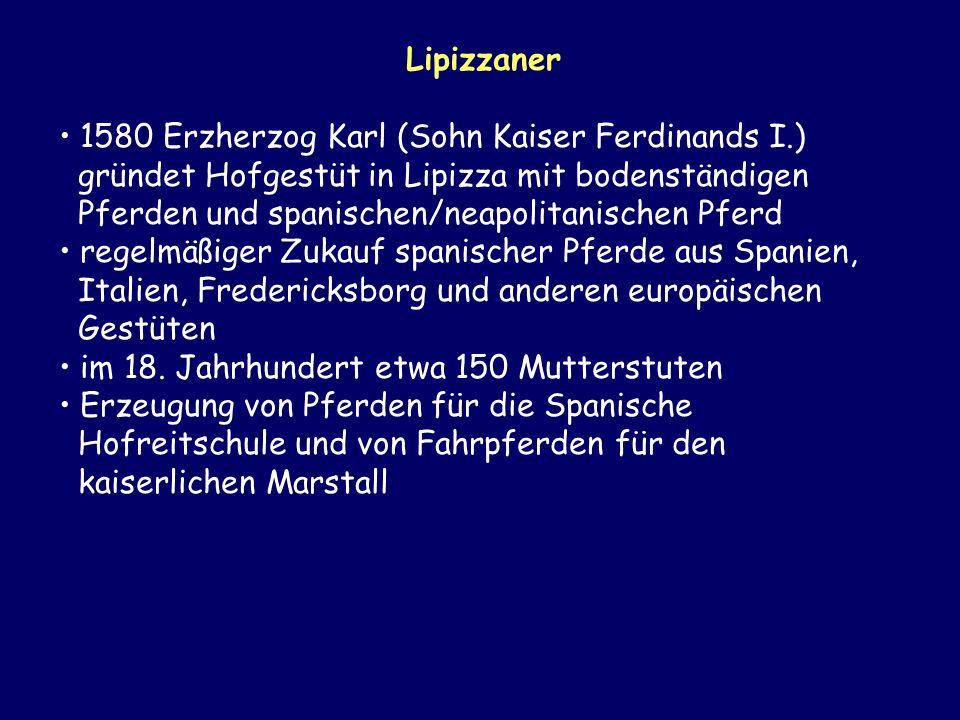 Lipizzaner 1580 Erzherzog Karl (Sohn Kaiser Ferdinands I.) gründet Hofgestüt in Lipizza mit bodenständigen Pferden und spanischen/neapolitanischen Pfe