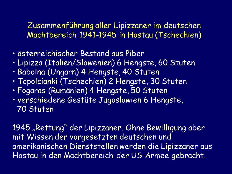 Zusammenführung aller Lipizzaner im deutschen Machtbereich 1941-1945 in Hostau (Tschechien) österreichischer Bestand aus Piber Lipizza (Italien/Slowen