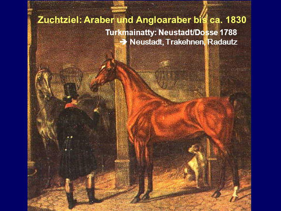 Zuchtziel: Araber und Angloaraber bis ca. 1830 Turkmainatty: Neustadt/Dosse 1788 Neustadt, Trakehnen, Radautz