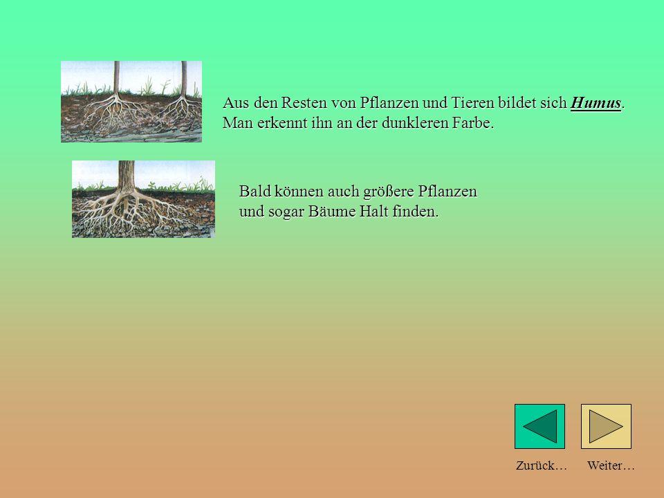 Weiter…Zurück… Aus den Resten von Pflanzen und Tieren bildet sich Humus. Man erkennt ihn an der dunkleren Farbe.