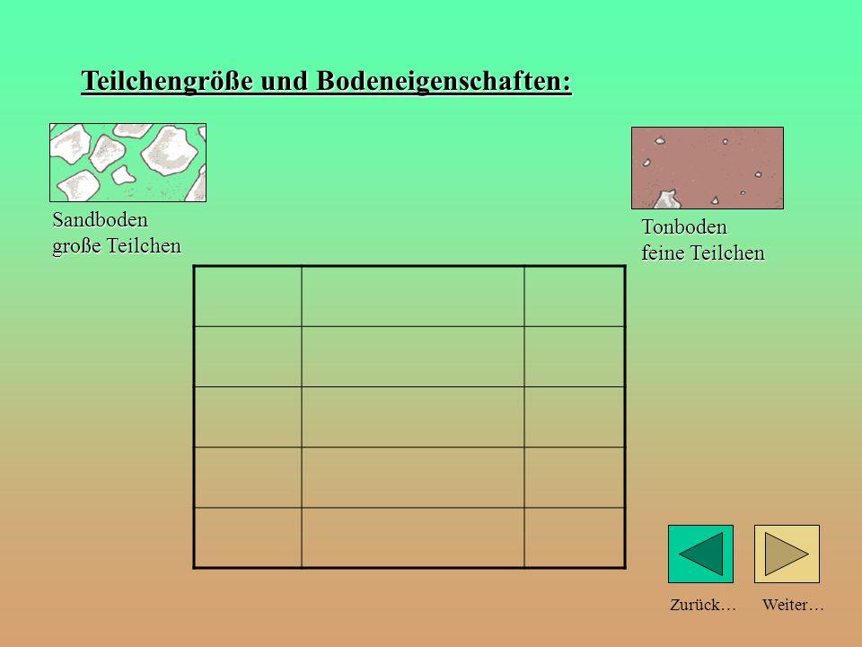 Weiter…Zurück… Bodenprofil: (Schnitt durch den Boden) Humus (abgestorbene Pflanzen und Tiere) dunkel gefärbt! Übergangsschicht (braun) mit stark verwi
