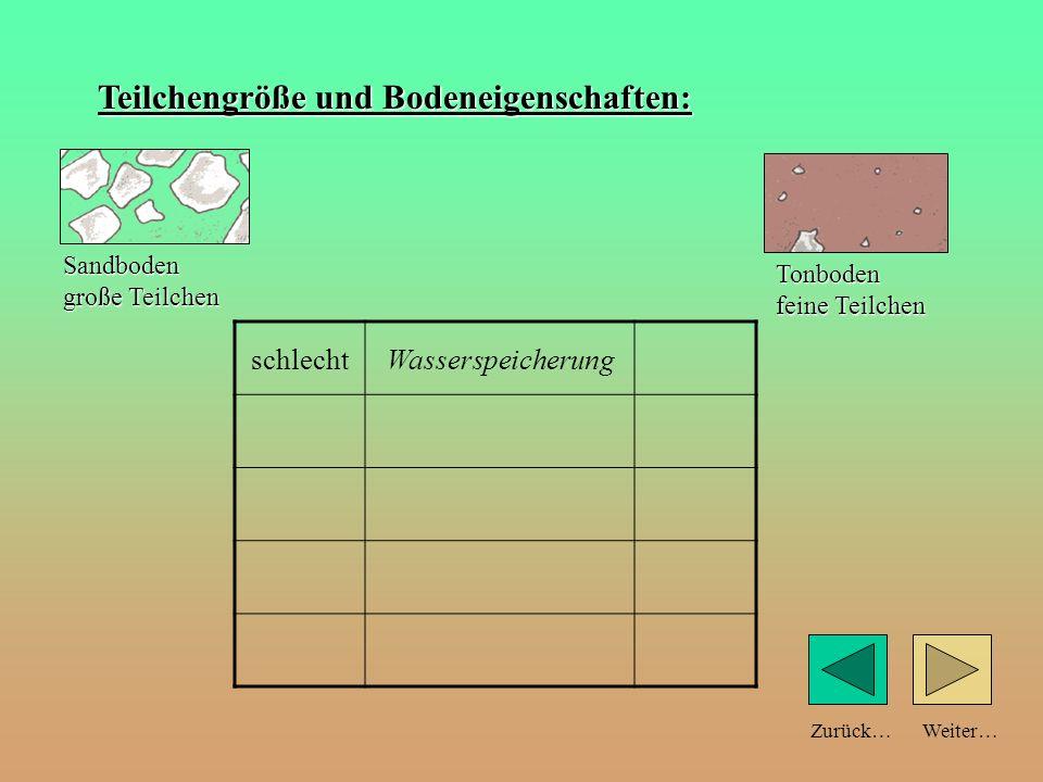 Weiter…Zurück… Teilchengröße und Bodeneigenschaften: Wasserspeicherung Sandboden große Teilchen Tonboden feine Teilchen