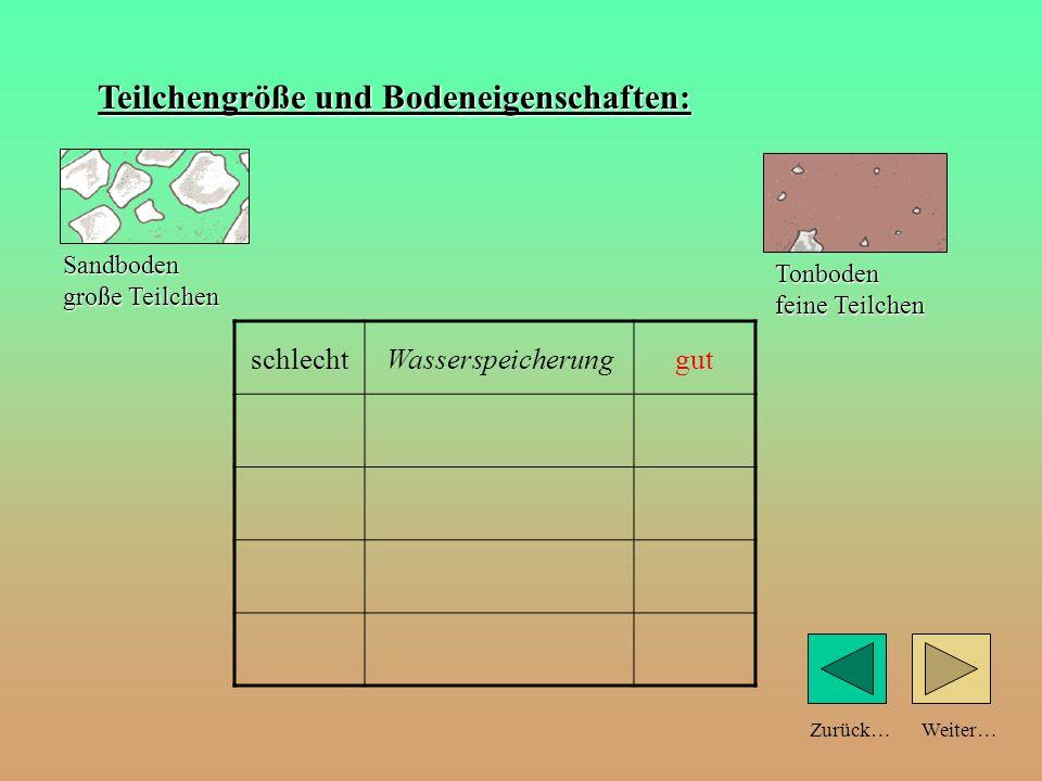 Weiter…Zurück… Teilchengröße und Bodeneigenschaften: schlechtWasserspeicherung Sandboden große Teilchen Tonboden feine Teilchen
