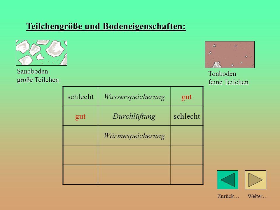 Weiter…Zurück… Teilchengröße und Bodeneigenschaften: schlechtWasserspeicherunggut Durchlüftungschlecht Sandboden große Teilchen Tonboden feine Teilche