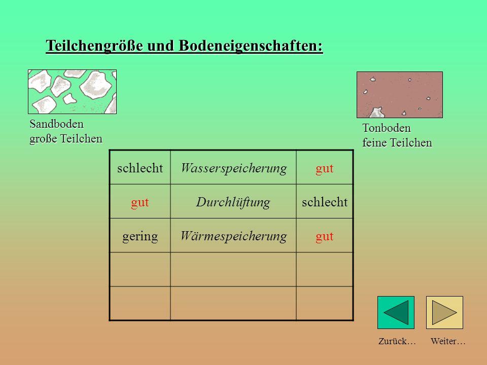 Weiter…Zurück… Teilchengröße und Bodeneigenschaften: schlechtWasserspeicherunggut Durchlüftungschlecht geringWärmespeicherung Sandboden große Teilchen