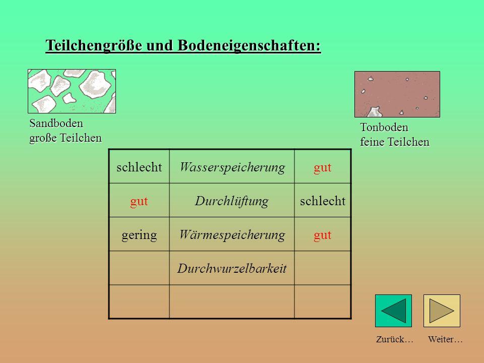 Weiter…Zurück… Teilchengröße und Bodeneigenschaften: schlechtWasserspeicherunggut Durchlüftungschlecht geringWärmespeicherunggut Sandboden große Teilc