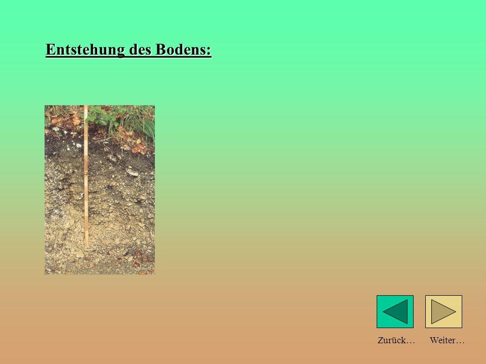 Weiter…Zurück… Bodenprofil: (Schnitt durch den Boden) Humus (abgestorbene Pflanzen und Tiere) dunkel gefärbt.