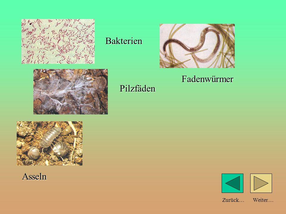 Weiter…Zurück… Bakterien Pilzfäden Fadenwürmer