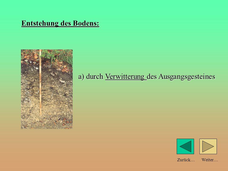 Weiter…Zurück… Teilchengröße und Bodeneigenschaften: Sandboden große Teilchen Tonboden feine Teilchen