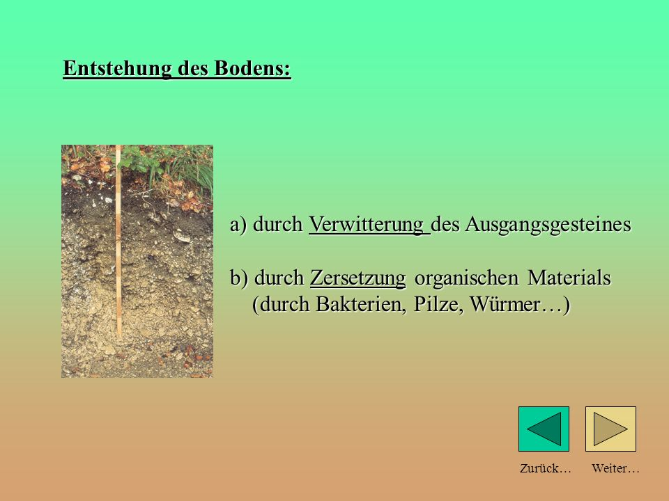 Weiter… a) durch Verwitterung des Ausgangsgesteines b) durch Zersetzung organischen Materials (durch Bakterien, Pilze, Würmer…) Zurück… Entstehung des Bodens: