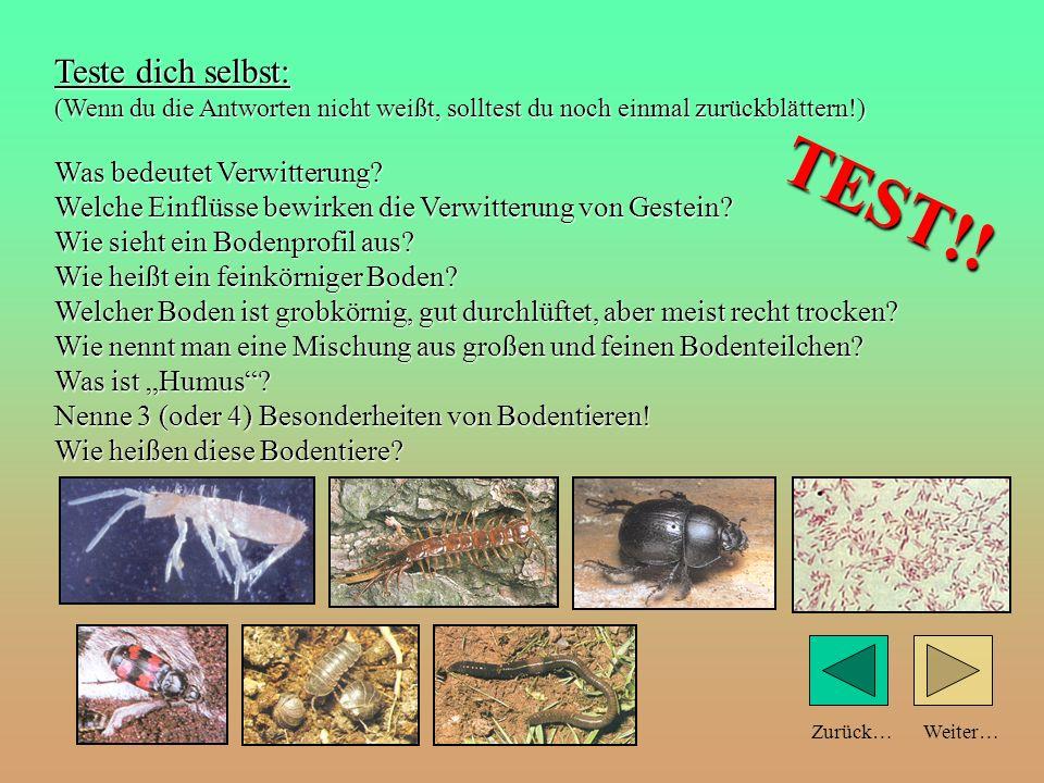 Auch große Tierkadaver werden zerlegt … z. B. vom Totengräber Weiter…Zurück…