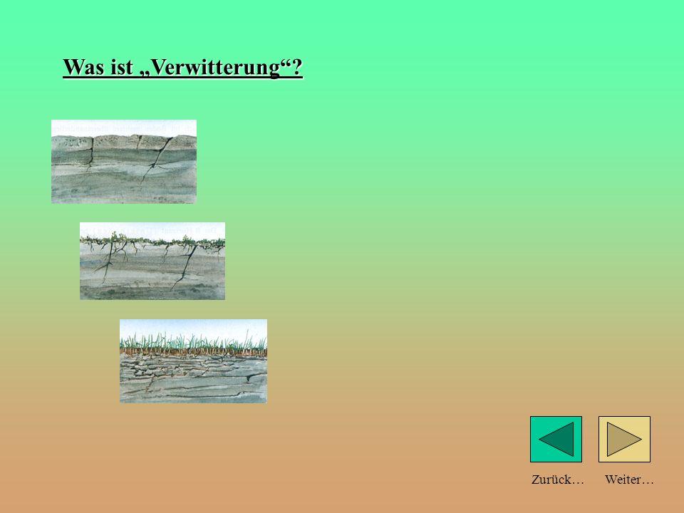 Weiter… a) durch Verwitterung des Ausgangsgesteines b) durch Zersetzung organischen Materials (durch Bakterien, Pilze, Würmer…) Zurück… Entstehung des