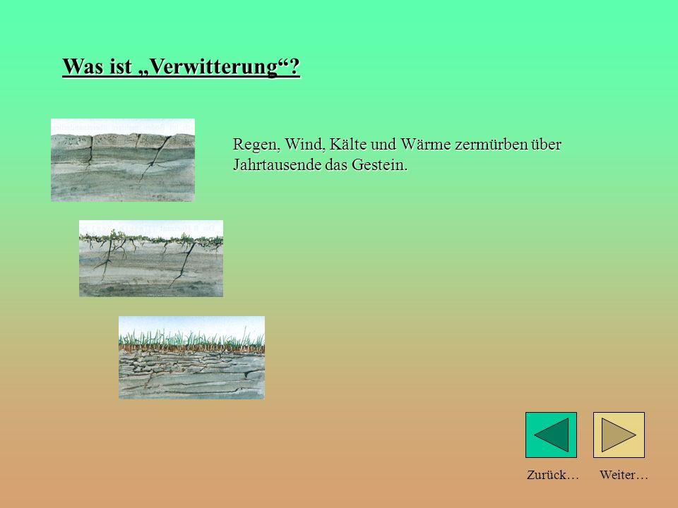 Weiter…Zurück… Teilchengröße und Bodeneigenschaften: schlechtWasserspeicherunggut Sandboden große Teilchen Tonboden feine Teilchen