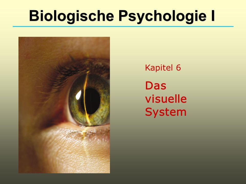 Kapitel 6 Das visuelle System Biologische Psychologie I