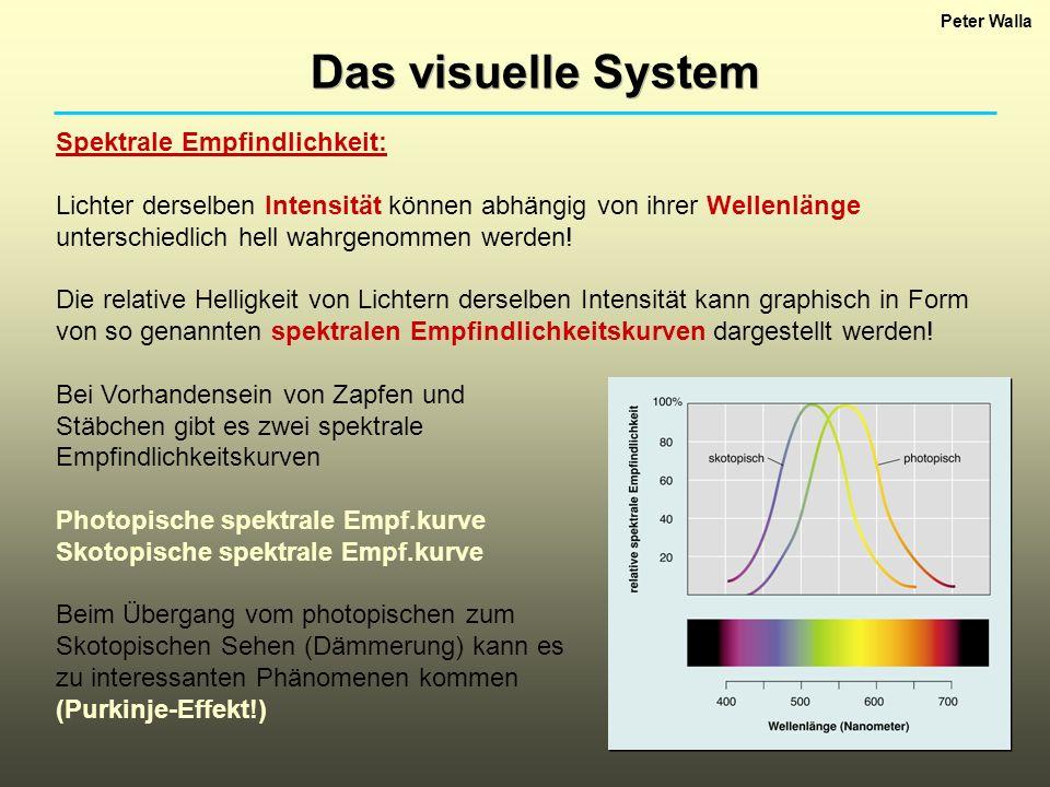 Peter Walla Das visuelle System Spektrale Empfindlichkeit: Lichter derselben Intensität können abhängig von ihrer Wellenlänge unterschiedlich hell wah