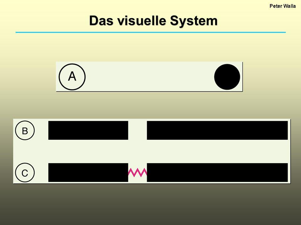 Peter Walla Das visuelle System